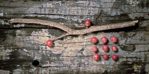 Methodical Berries Fine Art Photography