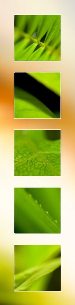 Macro Green Leaf Perrin Clarke Photography