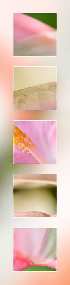 Pink Macro Photography Flowers Port Douglas Photography