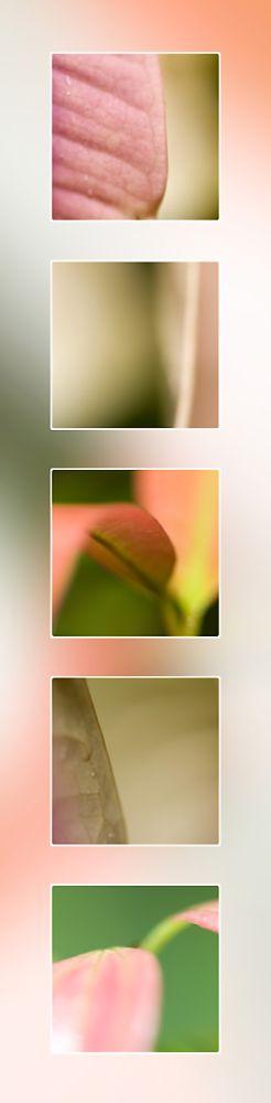 Portrait Pink Leaf Port Douglas Photography
