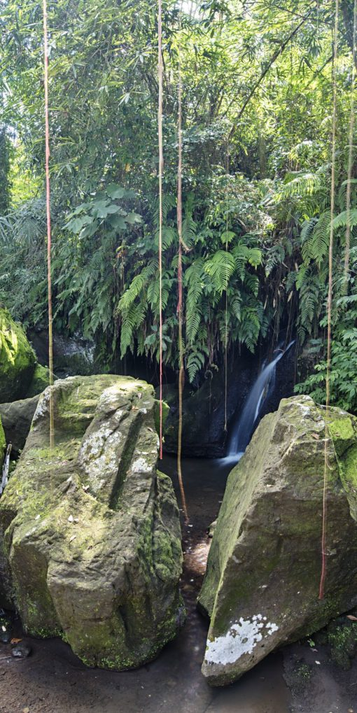 Rainforest Grotto Port Douglas Photography