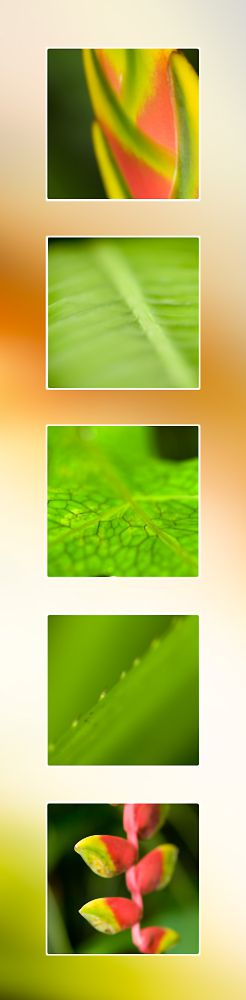 Tropical-Flower-Port-Douglas-Photography